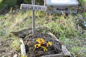 cellulart Die besten Beerdigungen